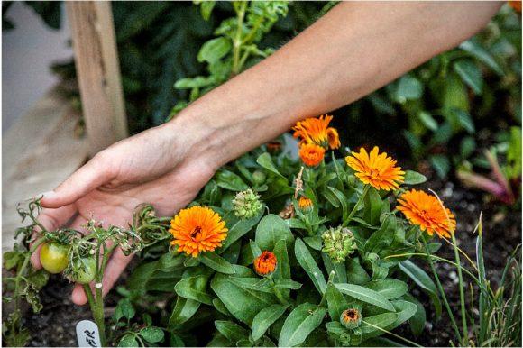 De nouveaux jardins pour l'autonomie alimentaire à Rimouski!